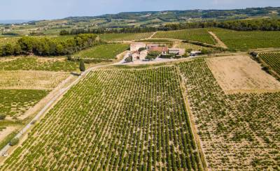 Prodej Vlastnost vinice RASTEAU